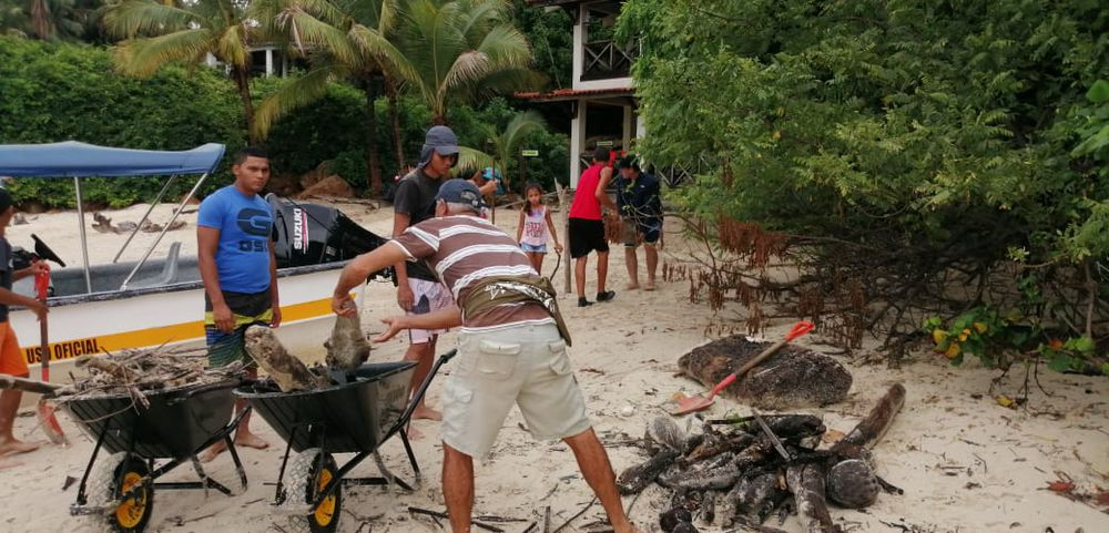 Voluntarios recogen desechos en isla Iguana