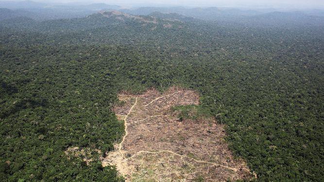Deforestación se acelera en el Amazonas