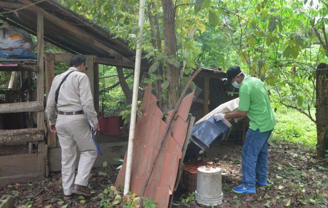 Aumentan a 98  los casos de virus hanta en Los Santos
