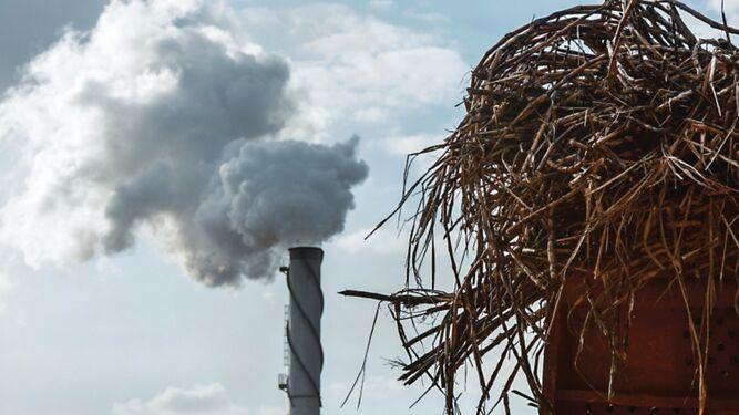 Etanol quita espacio a producción de azúcar