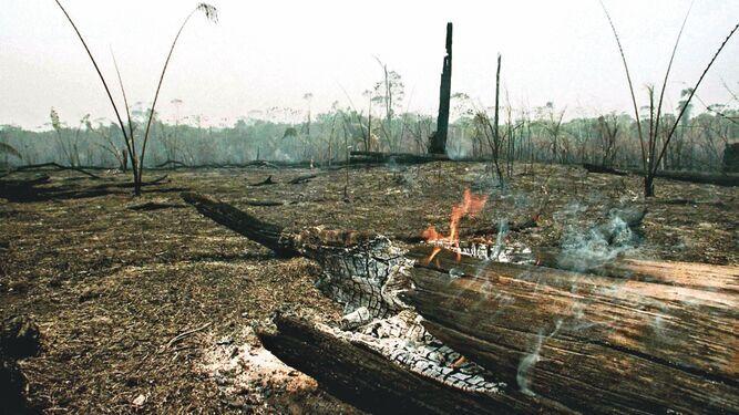 La agonía del Amazonas