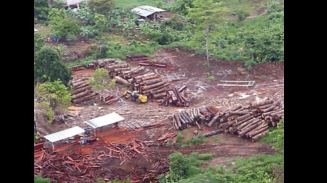 Líderes indígenas de la comarca Emberá amplían denuncia por tala ilegal