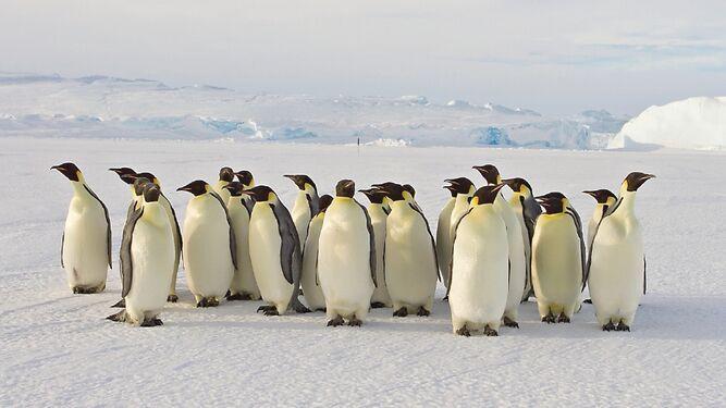 Pingüinos y focas, aportan a la Antártida