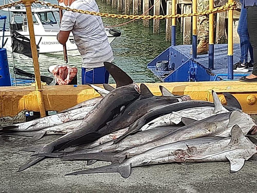 ARAP multa con $250 mil a embarcación por pesca prohibida