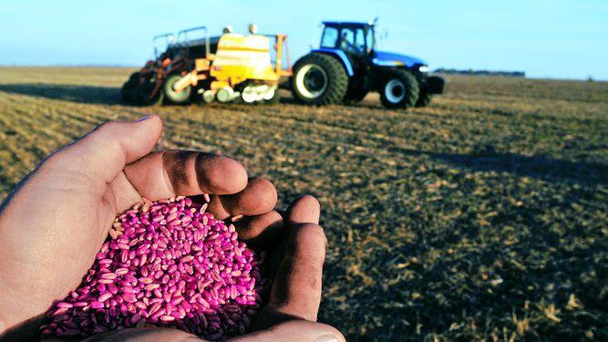 Argentina incrementa exportación de trigo