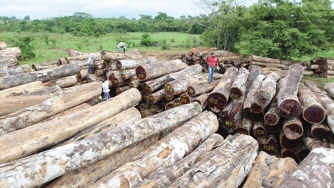 Diputados viajarán a Darién por tala ilegal