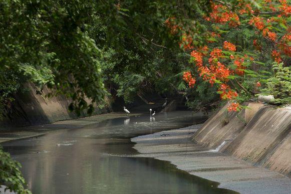 Matasnillo: Río que brilla, río que muere