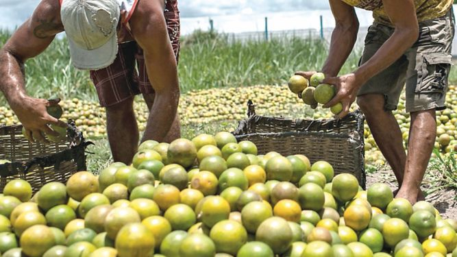 Chefs afrontan desafío de un menú bueno para el planeta