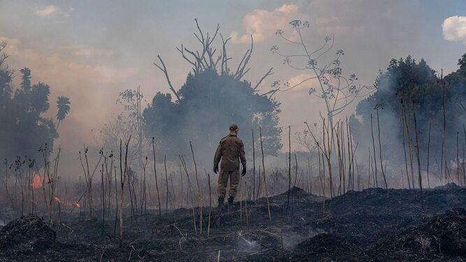 La Amazonia afronta peligros más allá de los incendios