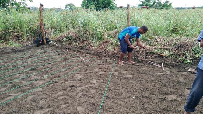 Construyen vivero para garantizar el nacimiento de 18 mil tortugas en isla Cañas